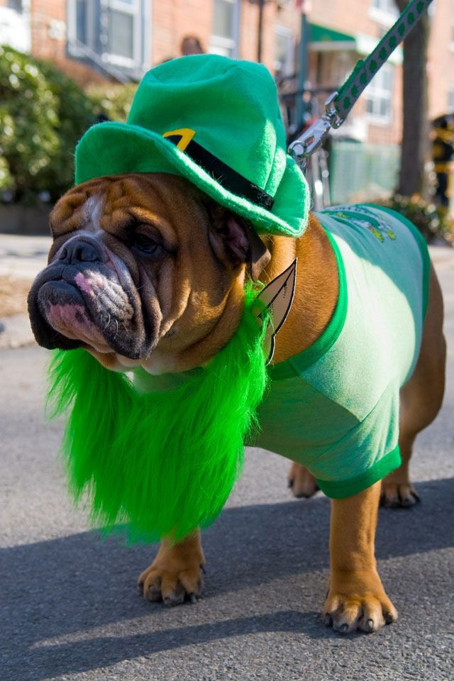 I Guess This Is What Dogs Look Like In Ireland Lol Dog