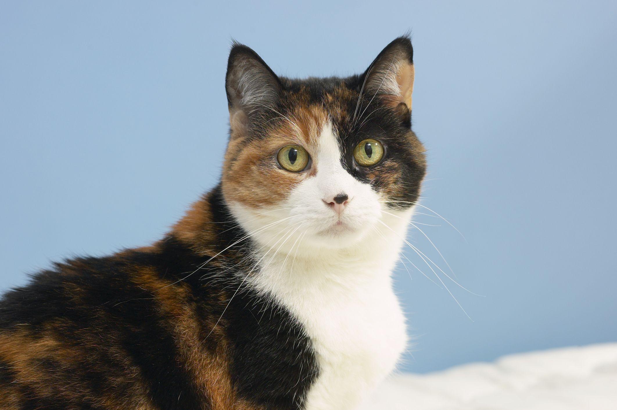 Homemade Cat Scratching Repellent Cat urine