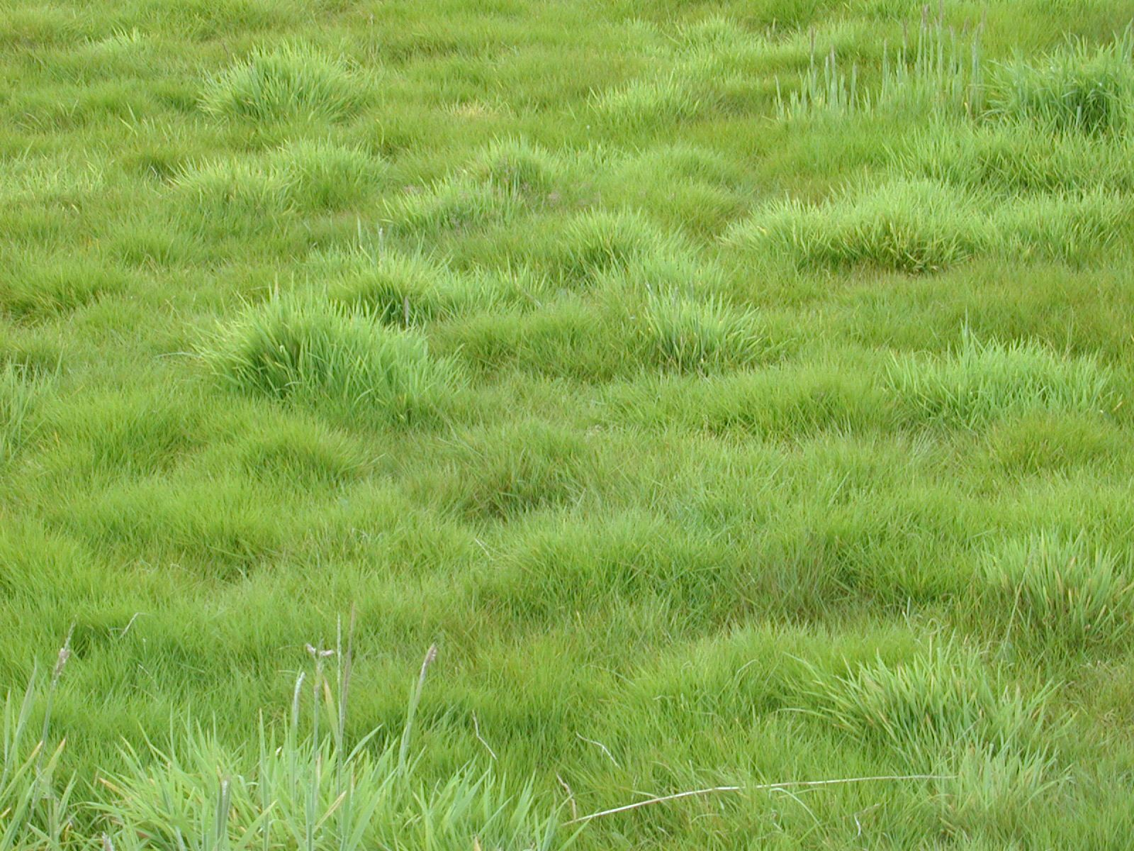 Planted meadow | ... : texture : nature plants grass green ...
