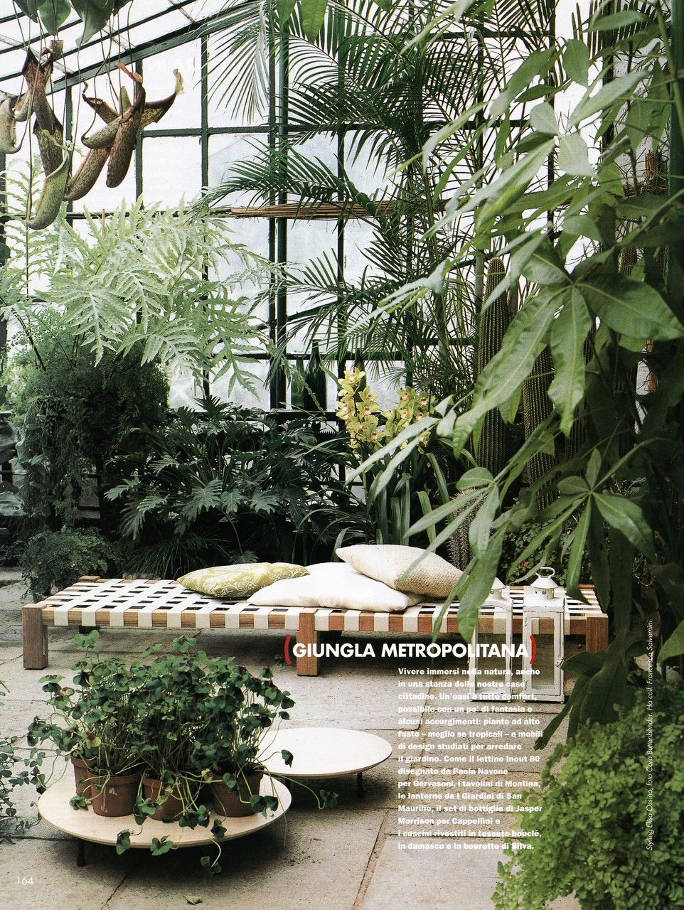 conservatory plants • Style School :: love those crazy-looking carnivorous pitcher plants hanging from the ceiling!