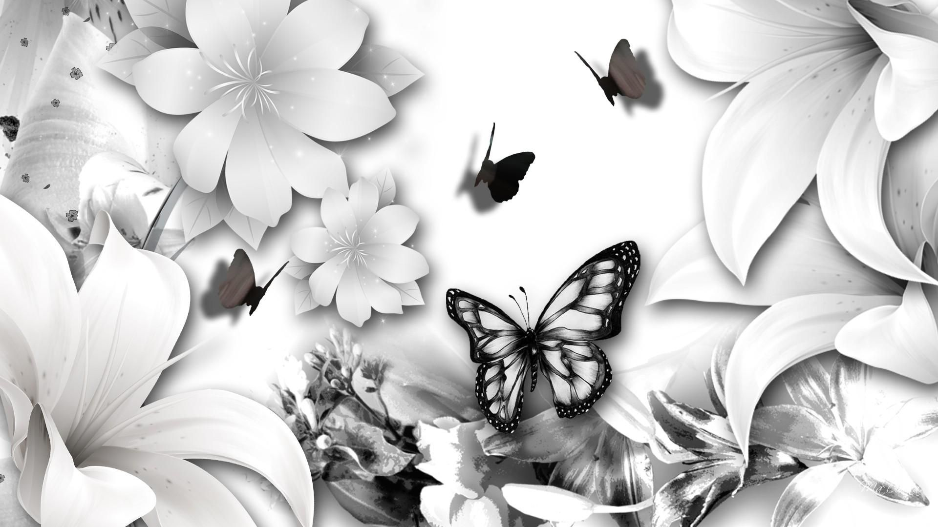 butterfly-black-and-white-wallpaper-4.jpg (1920×1080 ...