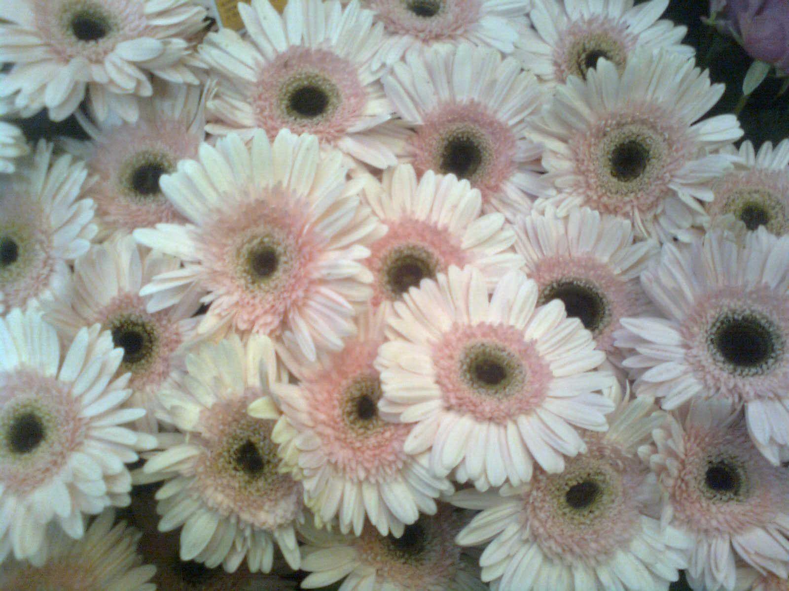 Tumben memang ngejepret ni bunga.ini asli lho! cantikkan?