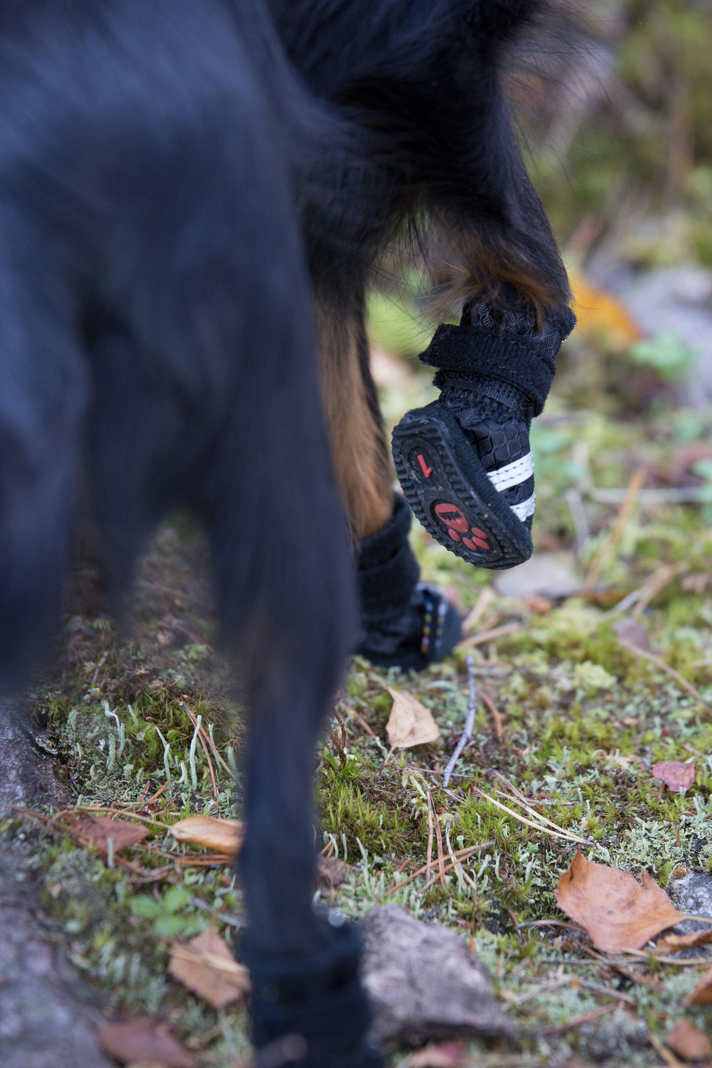 Rukka Pets Proff Dog Shoes