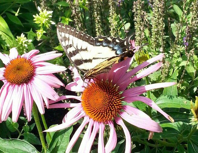 Taken in my garden:^)       Summer 2013