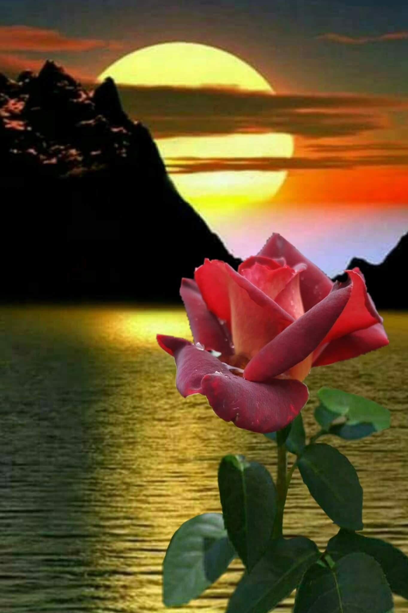 Boa Noite Paisagem Flores Lindas Paisagens Bela Lua