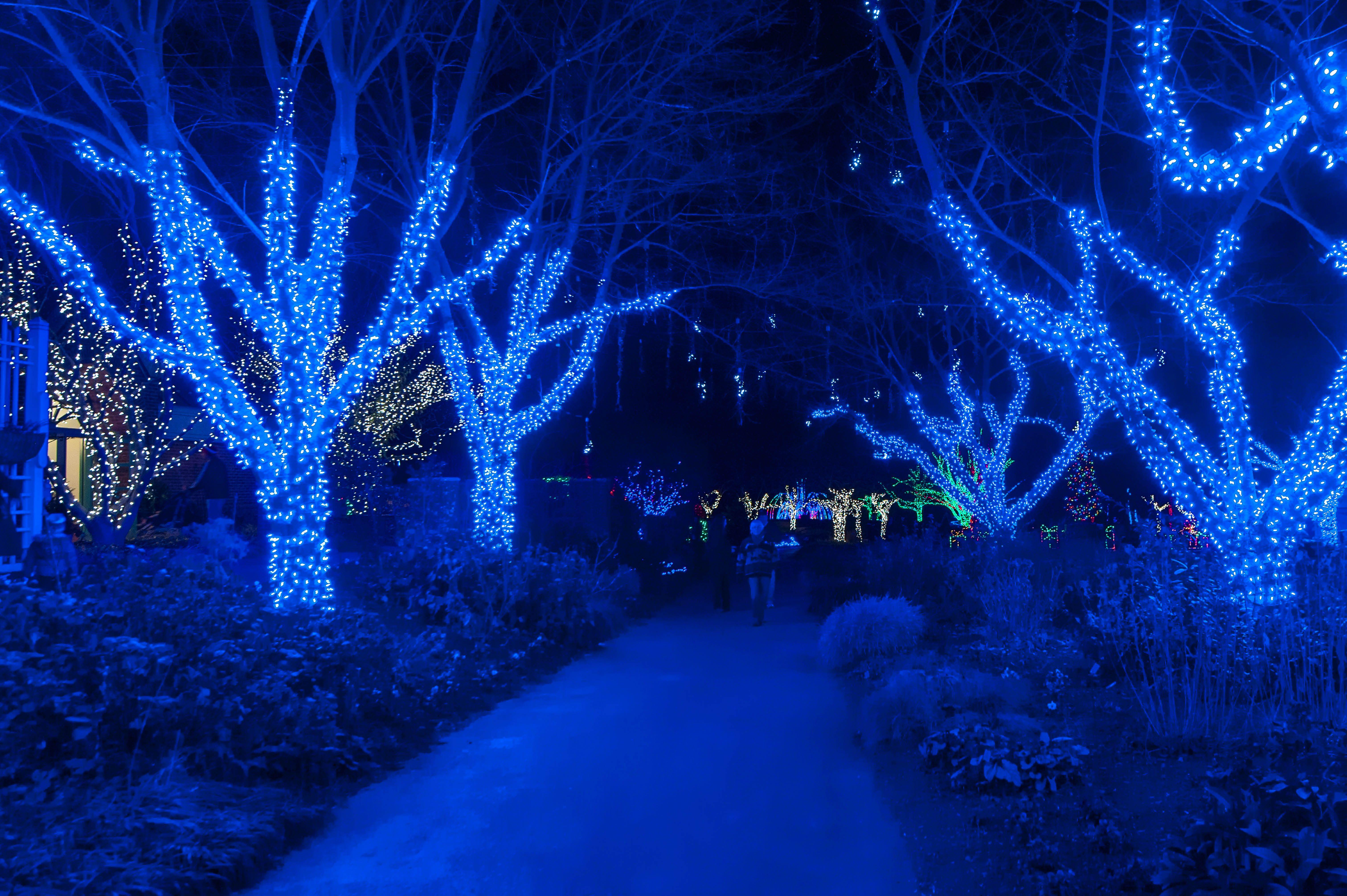 072416ba62cfed4658dc0727a5e8982b - Meadowlark's Winter Walk Of Lights Meadowlark Botanical Gardens December 28