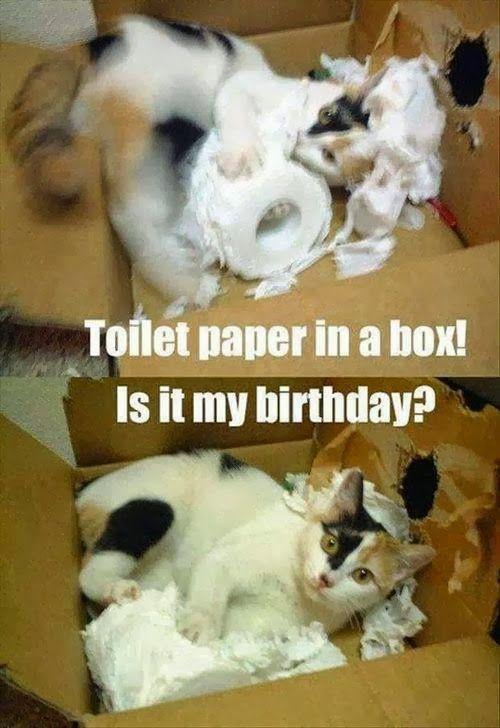 Toilet paper in a box! Is it my birthday! #cat #meme # ...