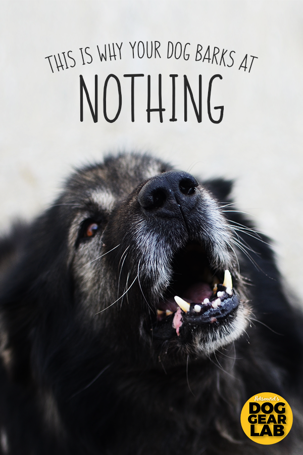 This Is Why Your Dog Barks At Nothing Dog Barking At Nothing Dog Barking Training Your Dog