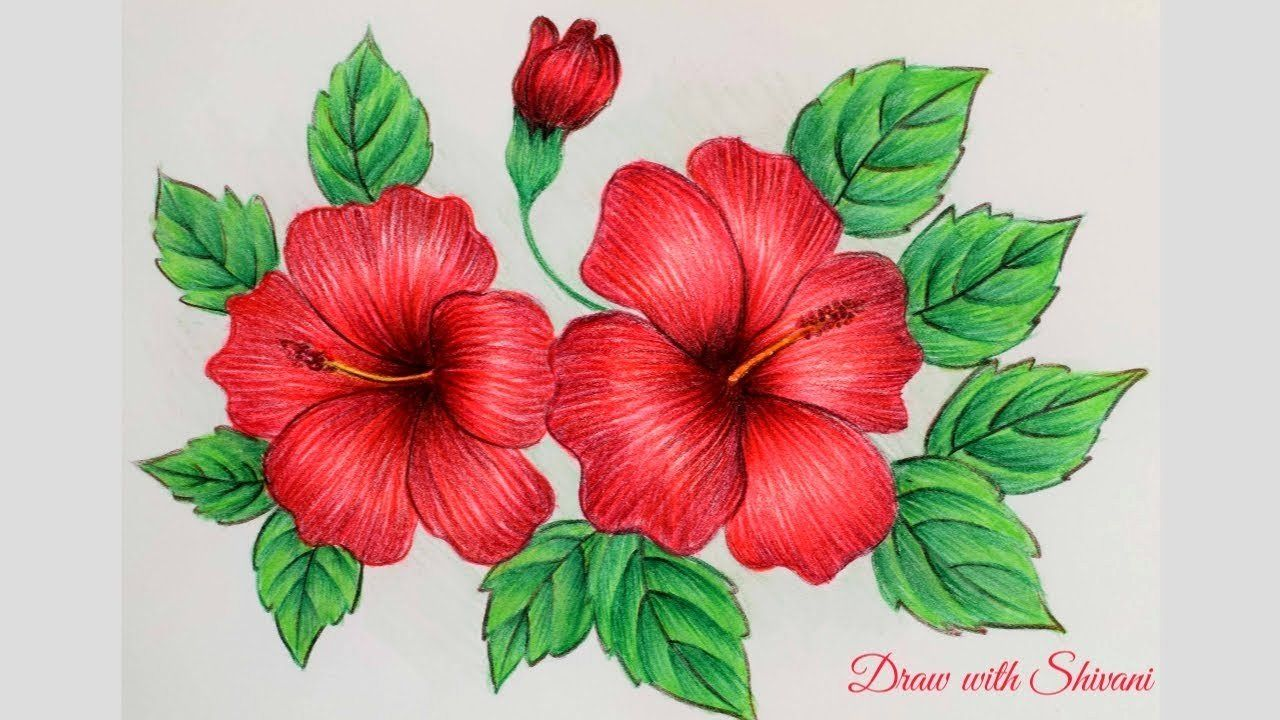 Coloring Flowers Pencils in 2020 Hibiscus flower drawing