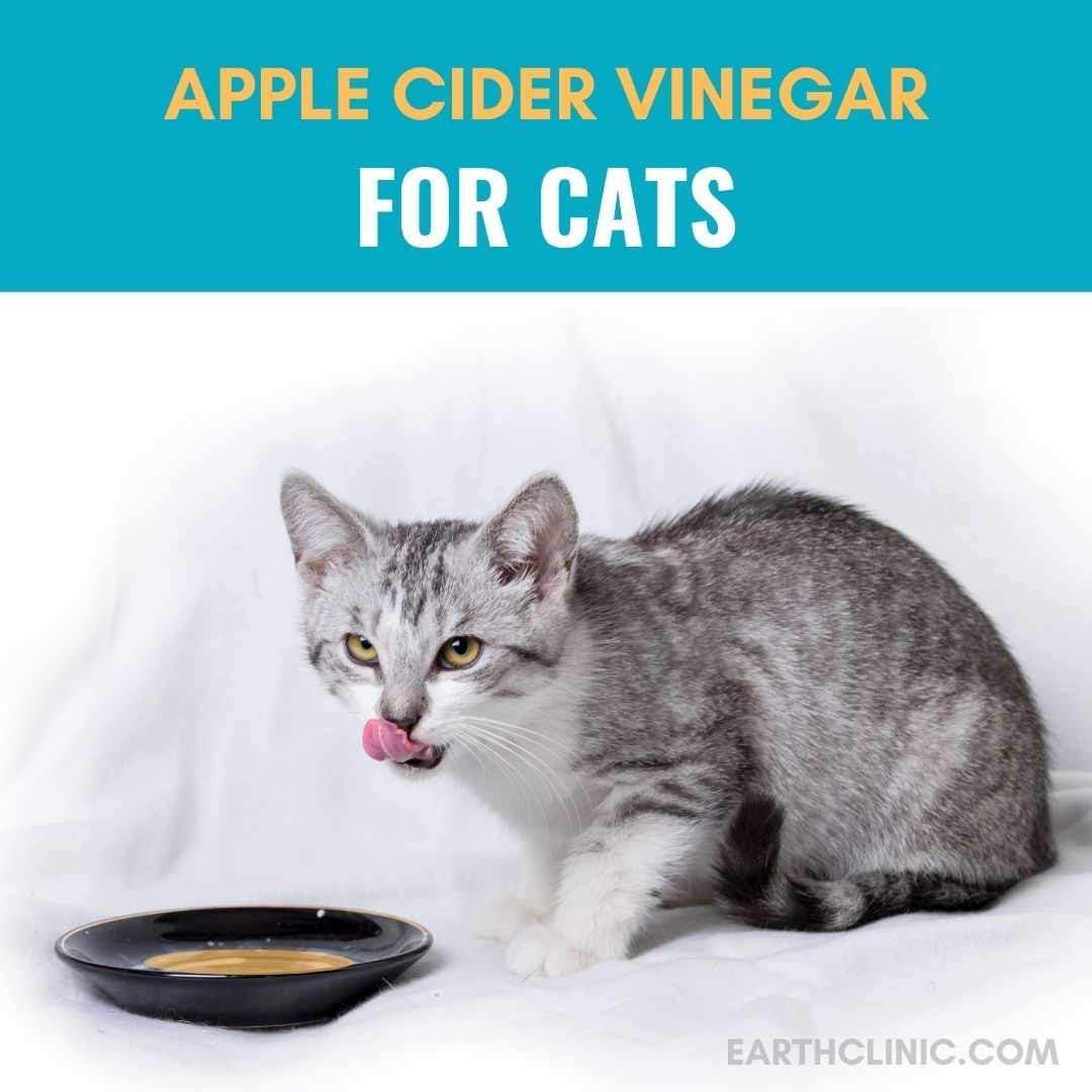 Apple Cider Vinegar For Cats In 2020 Cat Remedies Cider Vinegar Dog Remedies