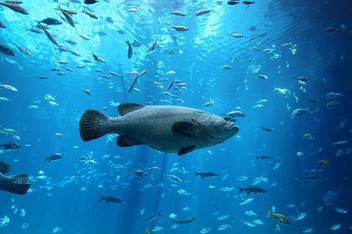 Pin By Kathy Wilfong On Go Fish Fish Pet Fish Sport Fishing