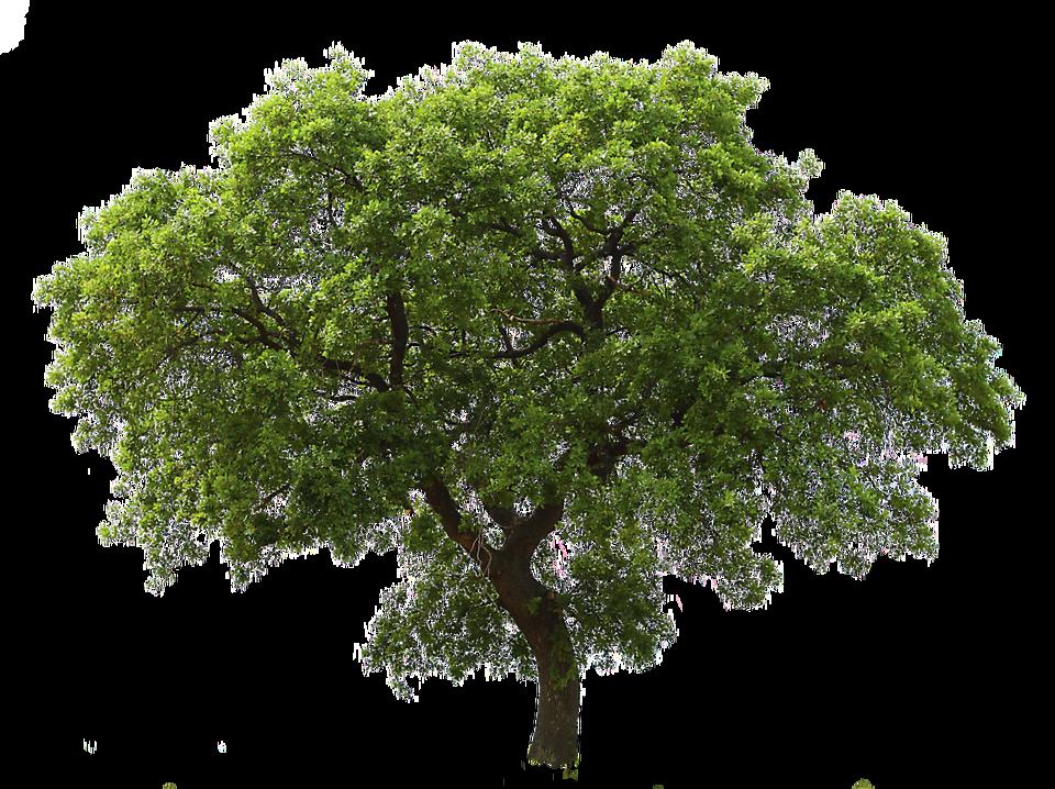 Big Green Tree Png Clip Art Pohon Png Animasi