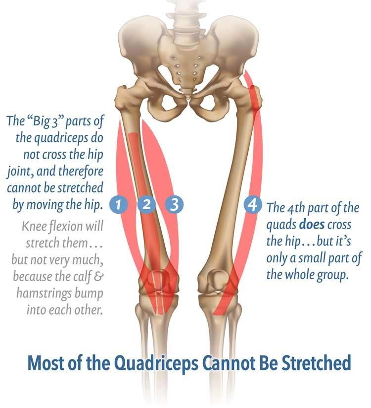 11 Muscles You Cannot Stretch | Interesting. | Pinterest | Muscles ...
