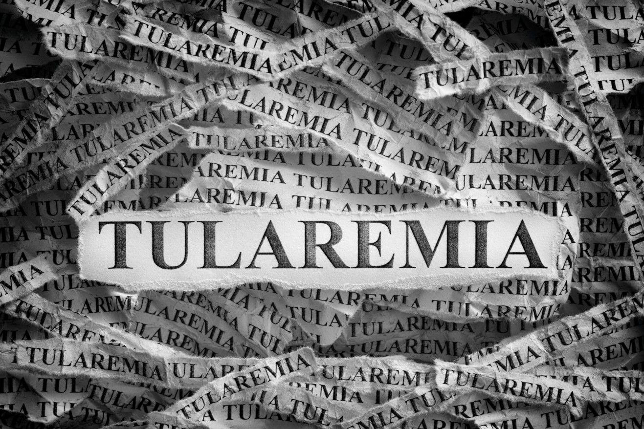 ¿Qué es la tularemia? Causas y síntomas