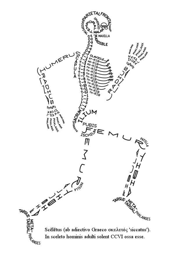 Scĕlĕtus - σκελετός | Kinesiology | Pinterest | Curiosidad, Grecia y ...