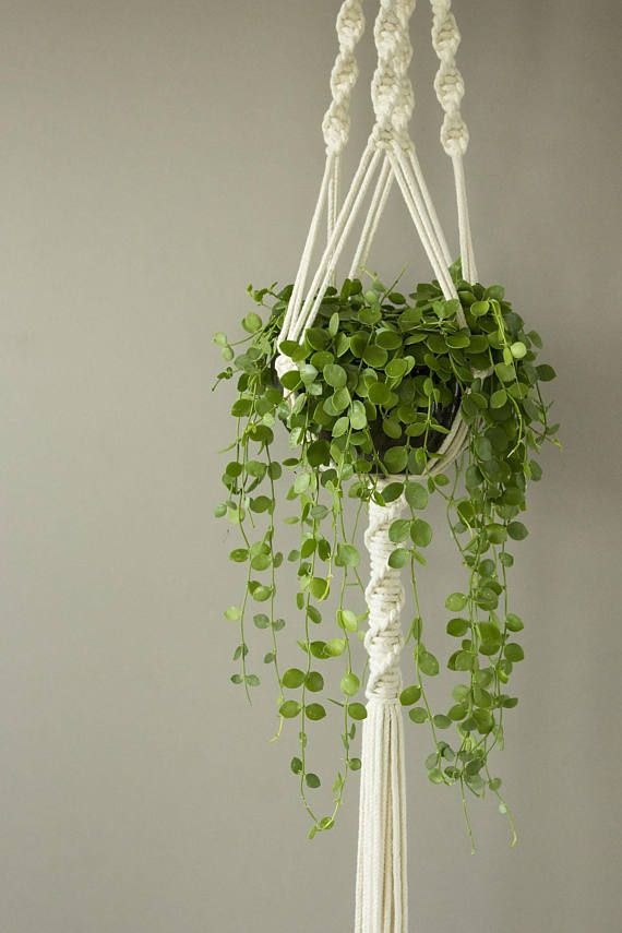 White Macrame Plant Hanger For Wide Pot Dischidia Nummularia Hanging Plants Indoor Macrame Plant Hanger Macrame Hanging Planter