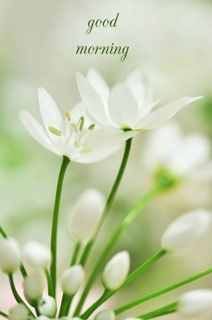 A New Day Starts Good Morning Pics Good Morning Cards Beautiful Flowers White Flowers