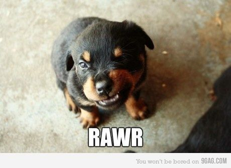 Adorable Cute Dog Funny Growl Cute Animals Funny Animal