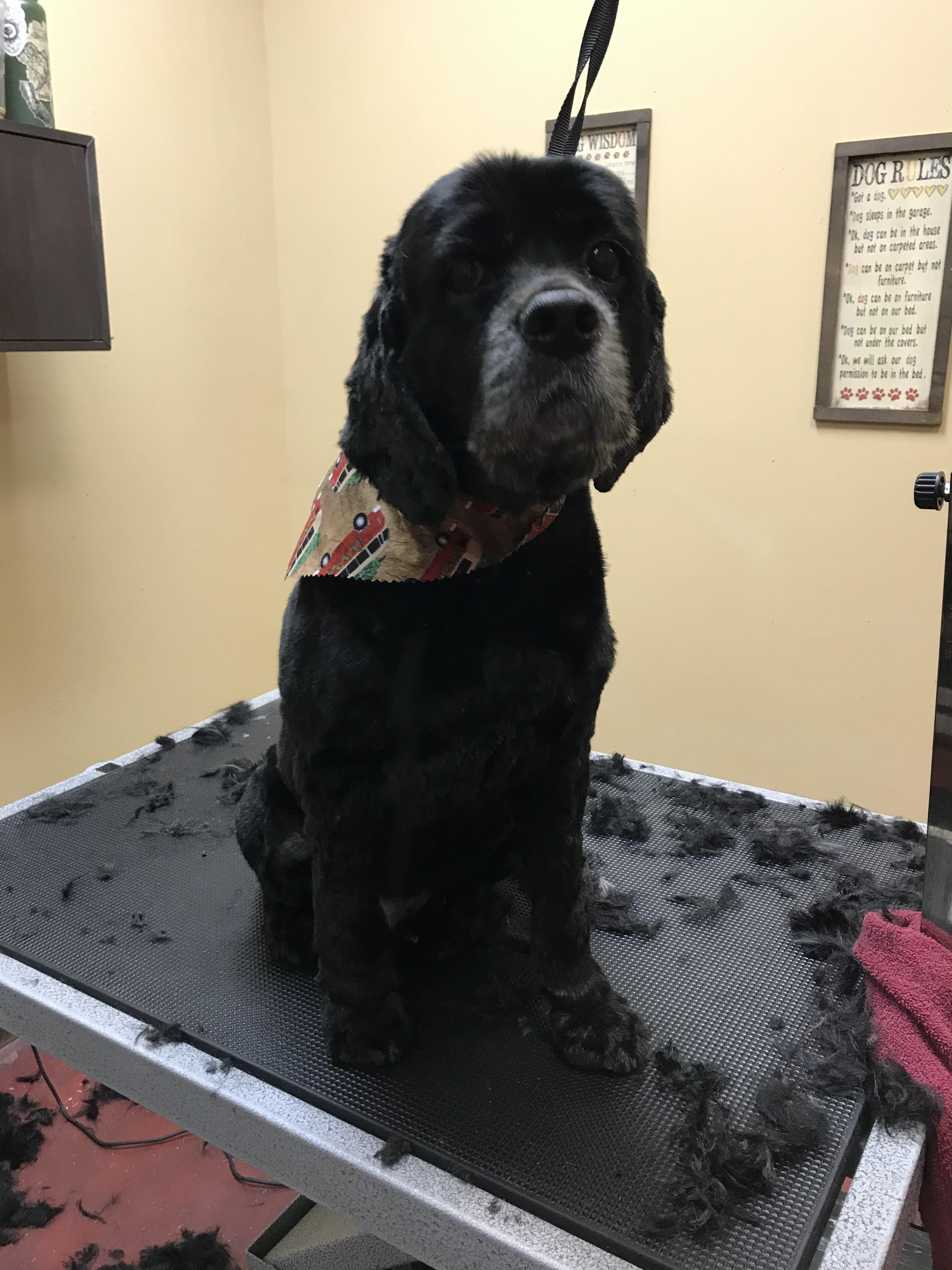 Handsome Leo After A Groom By Shelby Pet Grooming Healthy Pets Pets