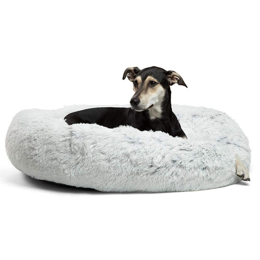 Dog Supplies Online Find The Best Dog Supplies Doglifeworld In 2020 Cool Dog Beds Dog Bed Cozy Dog Bed