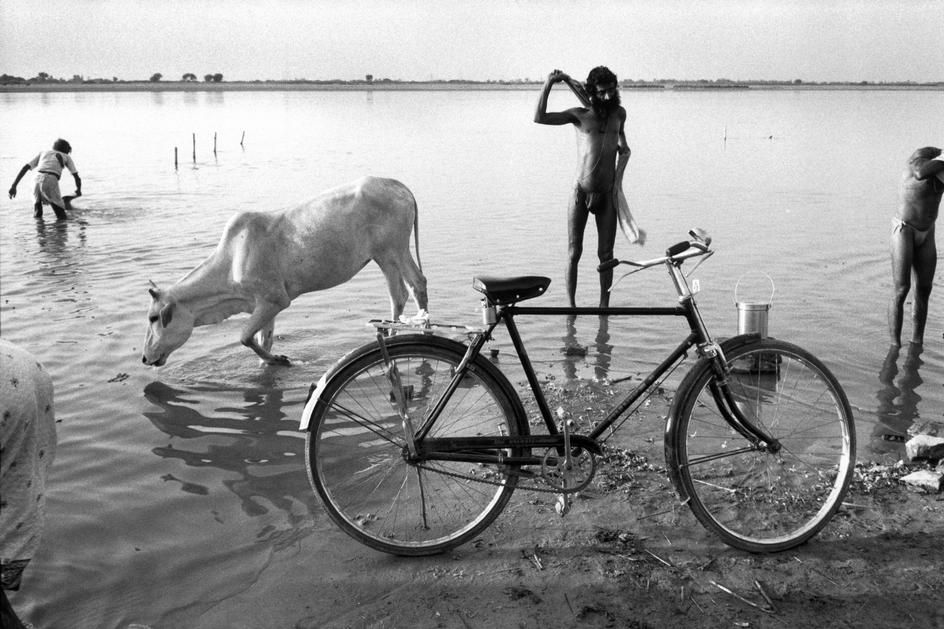 Abbas        INDIA. Uttar Pradesh. Ayodhya. 1990. A Sadhu (Hindu monk) and pilgrims bathe in the river. A cow drinks from it.