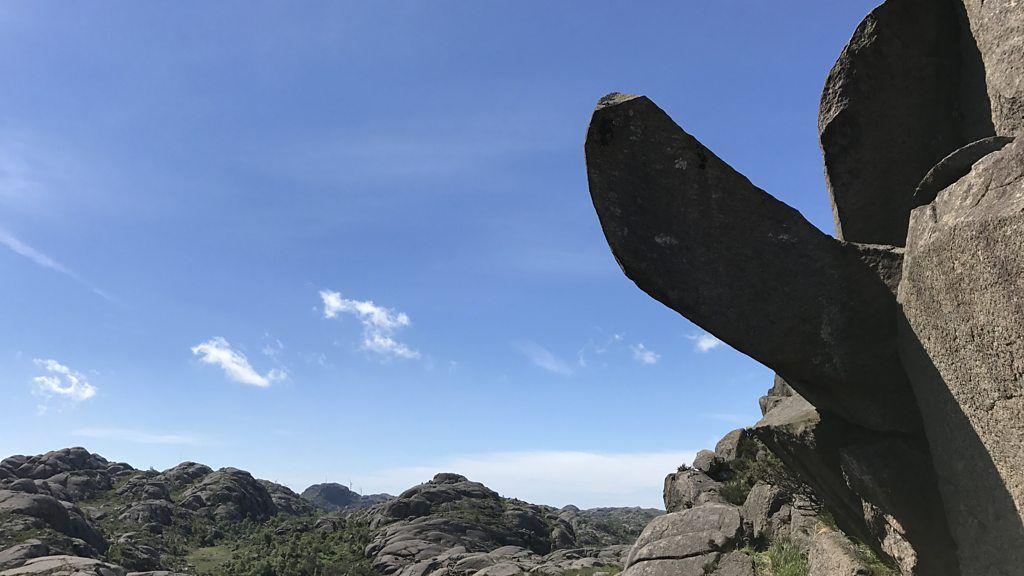 mounain barrens penis