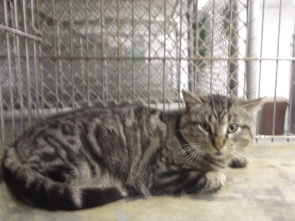19++ After hours animal control images