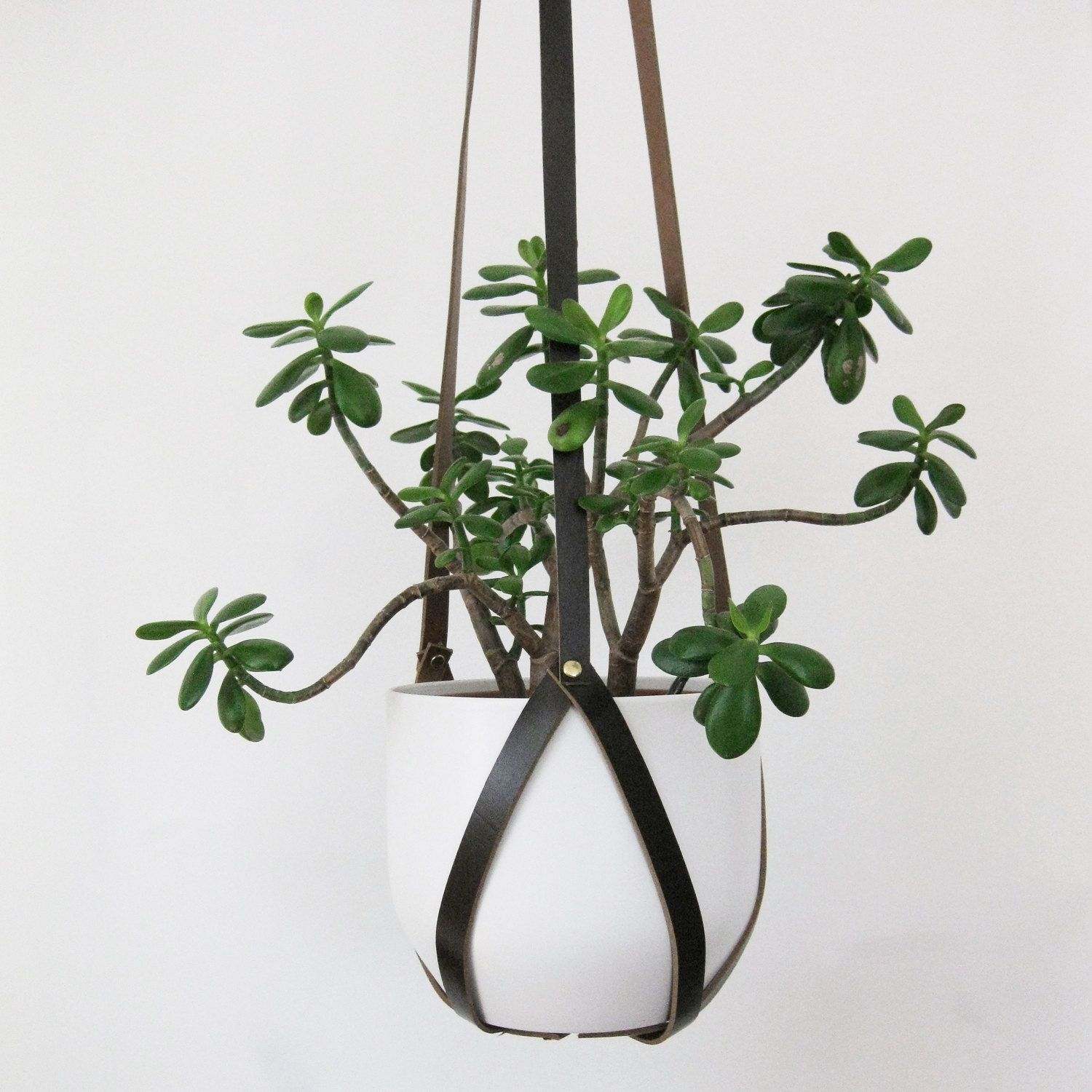 Recycled Leather Plant Hanger With Brass Rivets In Small Medium Or Large Jardineras Colgantes Macetas Colgantes Jardines Colgantes