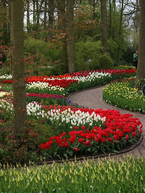 Curved beds of tulips (1) by KarlGercens.com, via Flickr