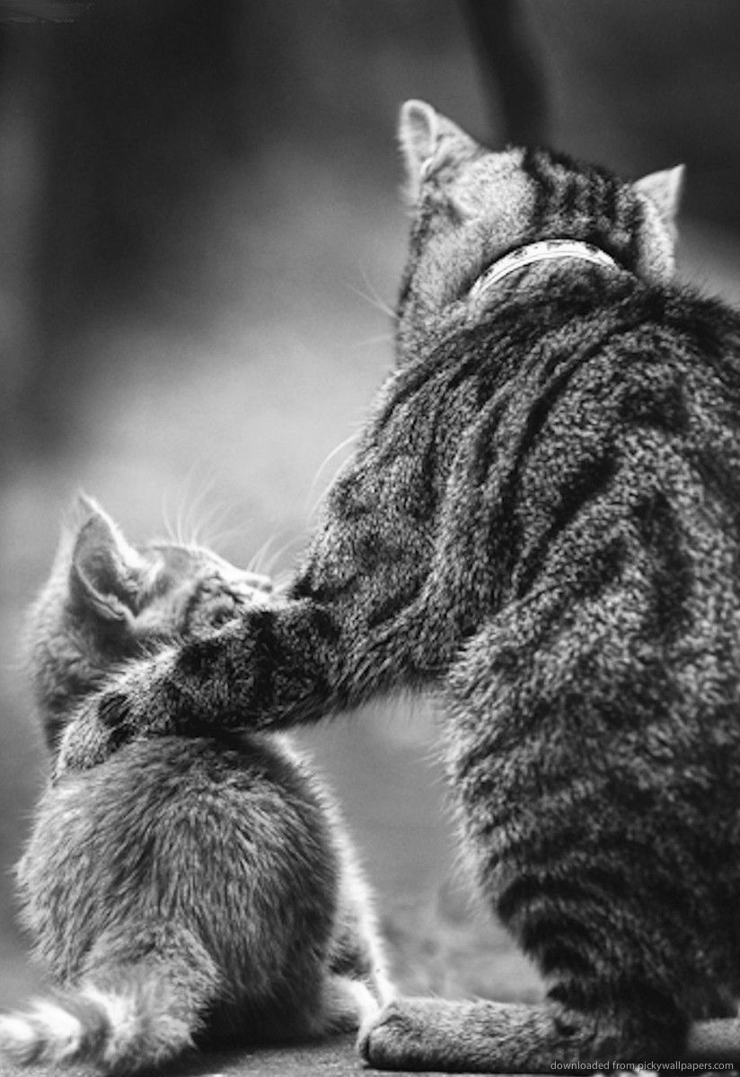 Even the toughest kittens need their Dad Happy Father's