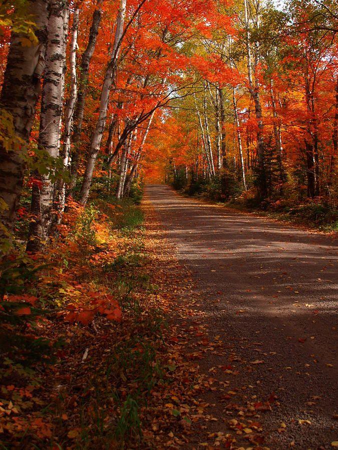 Scenic Maple Drive Photograph By James Peterson Autumn Landscape Autumn Scenery Autumn Scenes