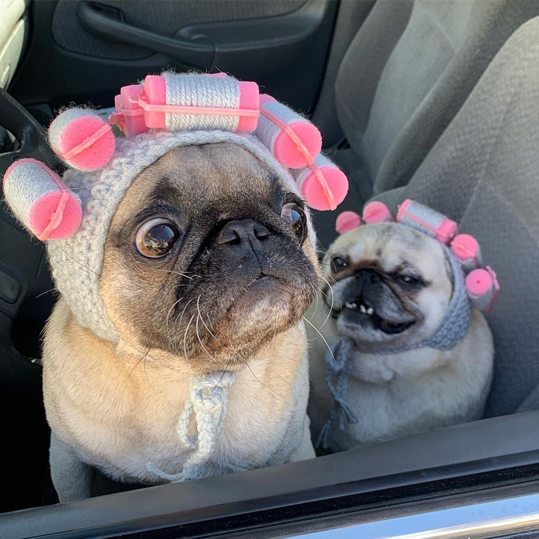 pug-crazy.com  #cutepuppies