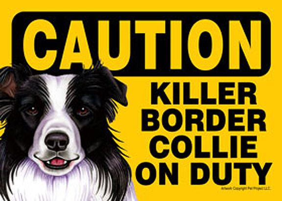 Border Collie Dog Caution Sign