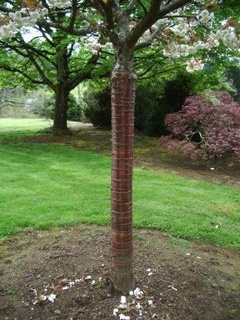 Fact Sheet Birch Bark Cherry Beautiful Tree Tree Garden Arch