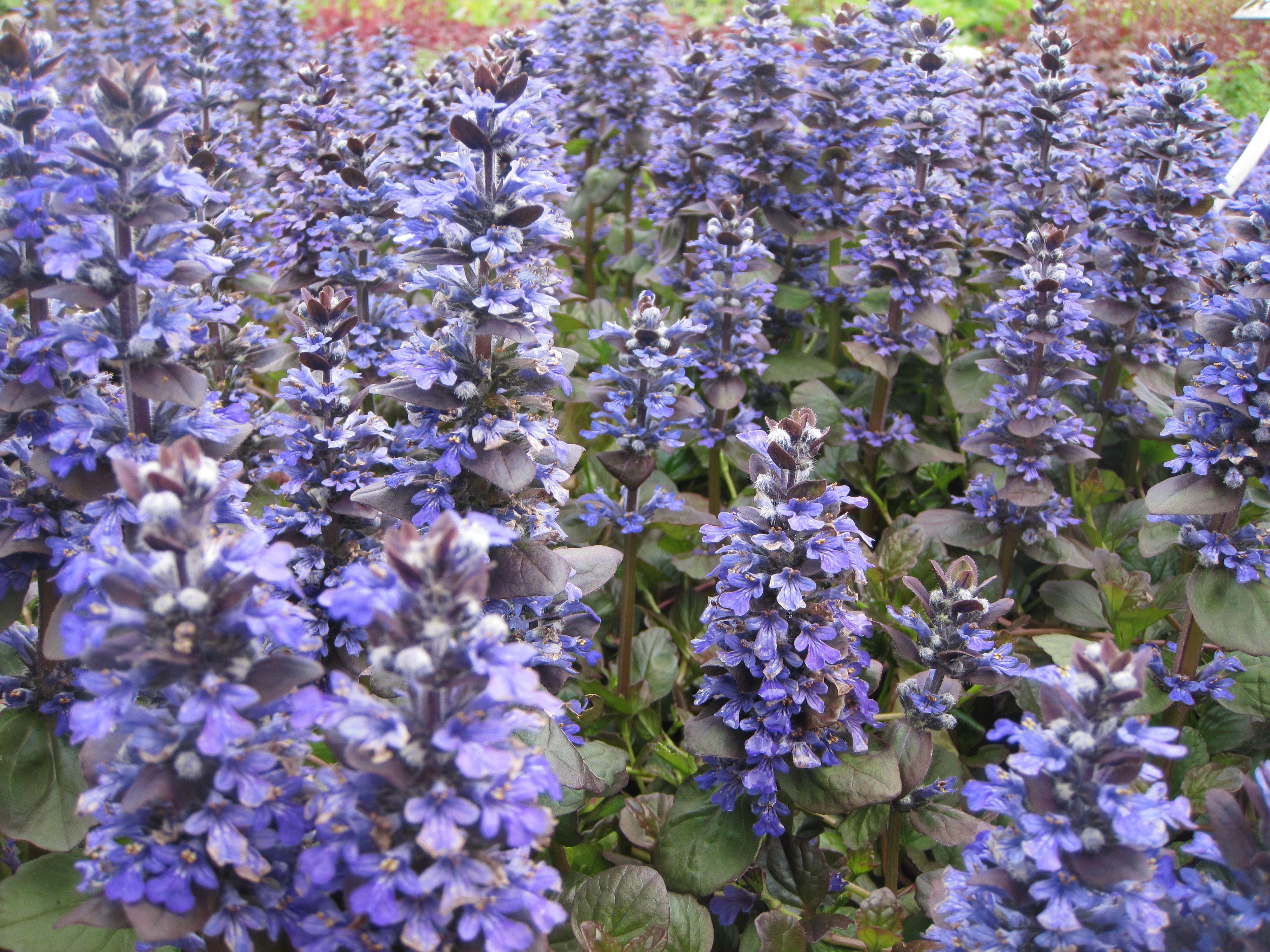 Arbuste Pour Terrain Calcaire 10 couvre-sols persistants qu'il faut avoir dans son jardin