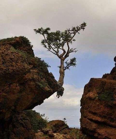 سيسوق الله لك رزقك كما يسوق الماء إلى شجرة معلقة على صخرة صماء يقين Amazing Nature Nature Tree