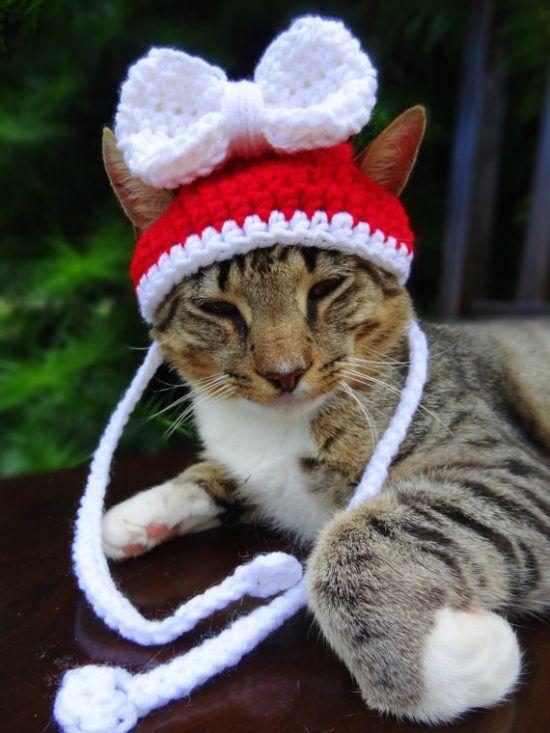 Cat Hat Crochet Pattern The Best Collection Ever Crochet