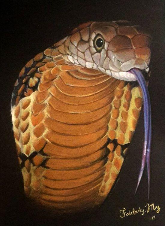 Dessin Cobra Royal Crayons De Couleur Fairlady My Art En