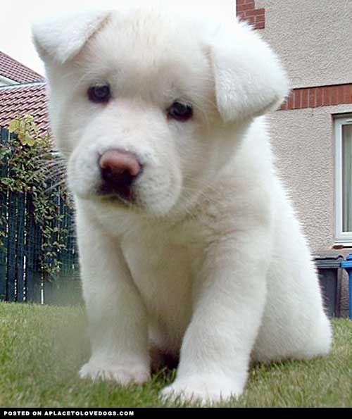 Pin On Cutie Pies