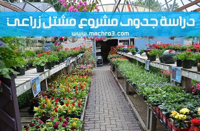 مشروع مشتل تكلفة مشروع مشتل مشروع مشتل اشجار مشروع مشتل زراعي السعودية مشروع مشتل ورد خطوات انشاء مشتل عمل مشتل Plant Nursery Mosquito Repelling Plants Plants