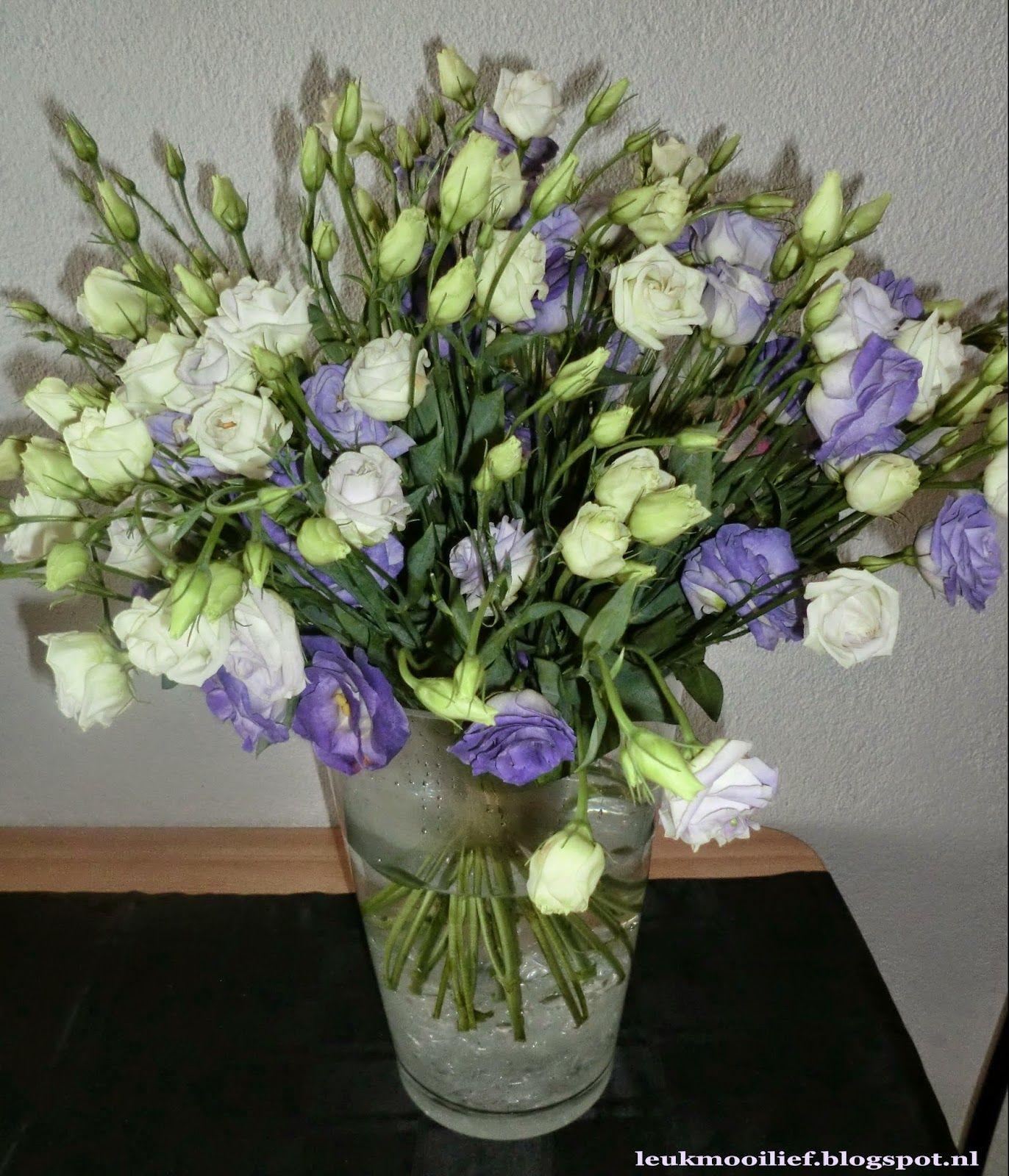 boom lila bloemen - Google zoeken