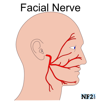 Nerve with Facial