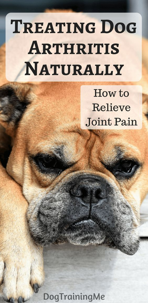 Treating dog arthritis naturally. We take a look at some signs your dog is suffering from joint pain, what medicines you can use to control your dog's arthritis pain, and how to treat dog arthritis naturally with diet and supplements. #dogarthritis #treatingdogarthritis