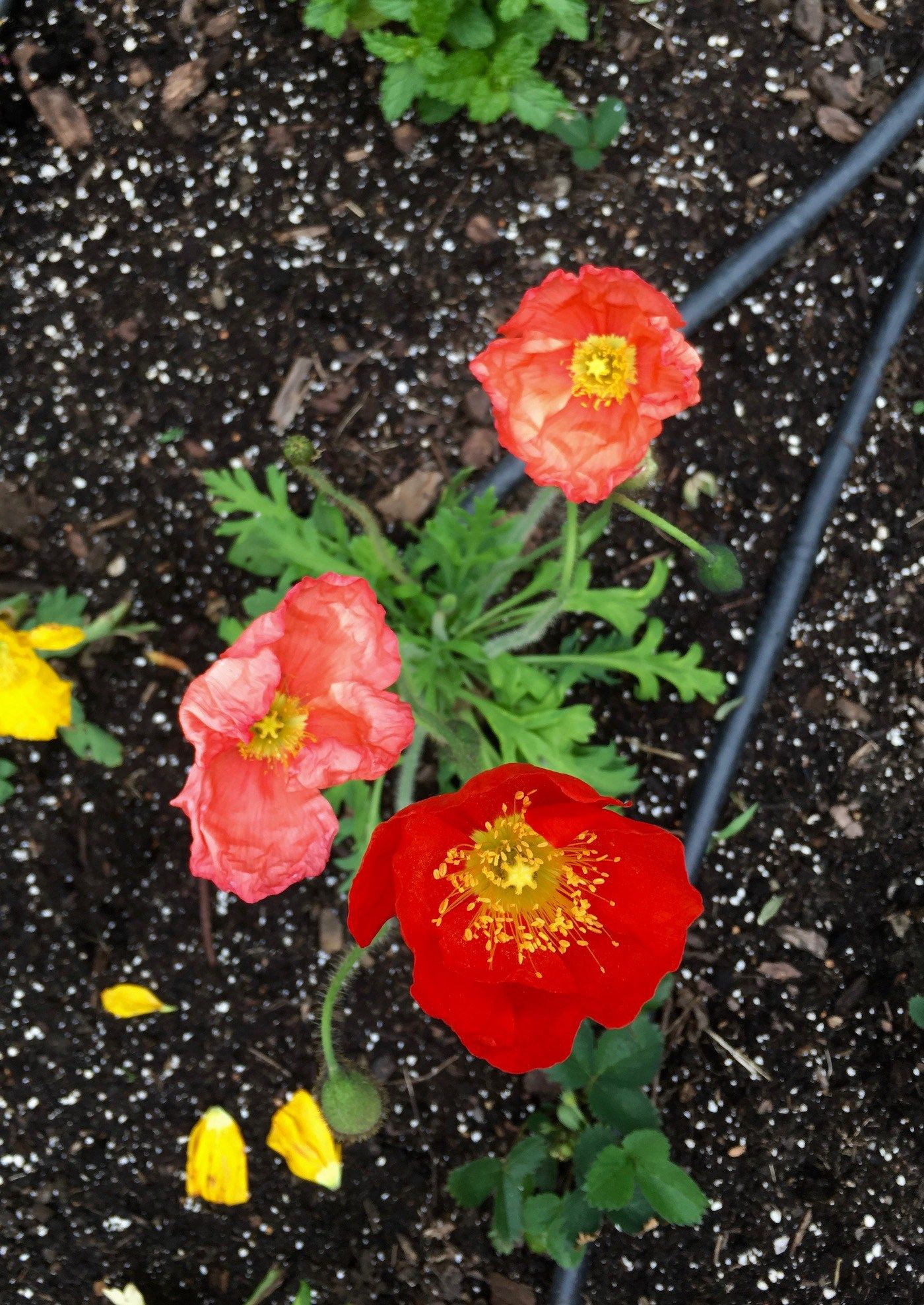 Pinterest : best potting soil for flowers - startupinsights.org