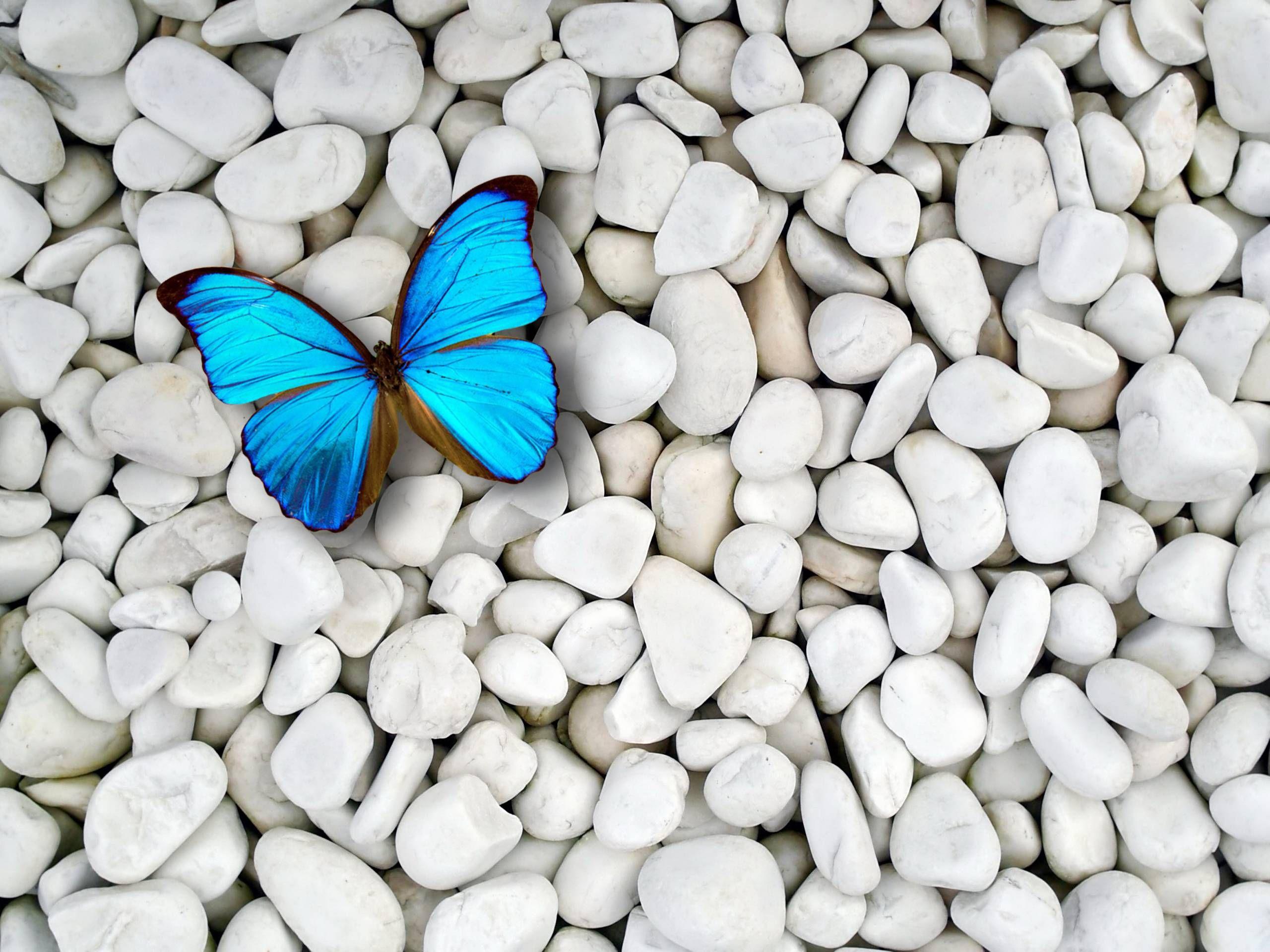 Desktop Blue Butterfly Wallpaper HD Natur Pinterest Blue - Butterfly wallpaper for computer desktop