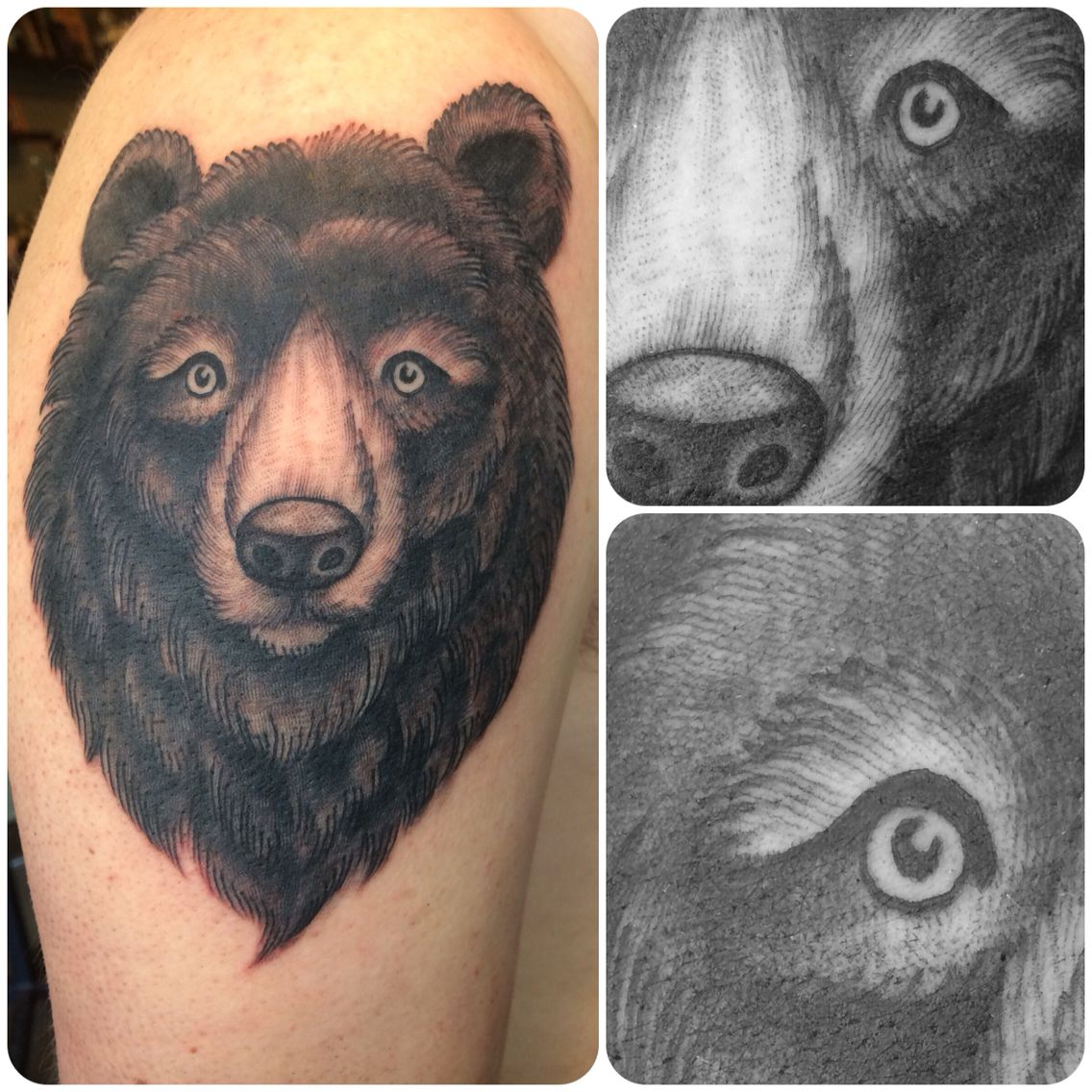 Zanependergast engraving woodcut style bear tattoo for Sacred addition tattoo east bridgewater ma