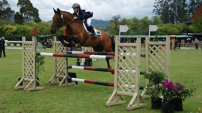 show jumping - Google Search