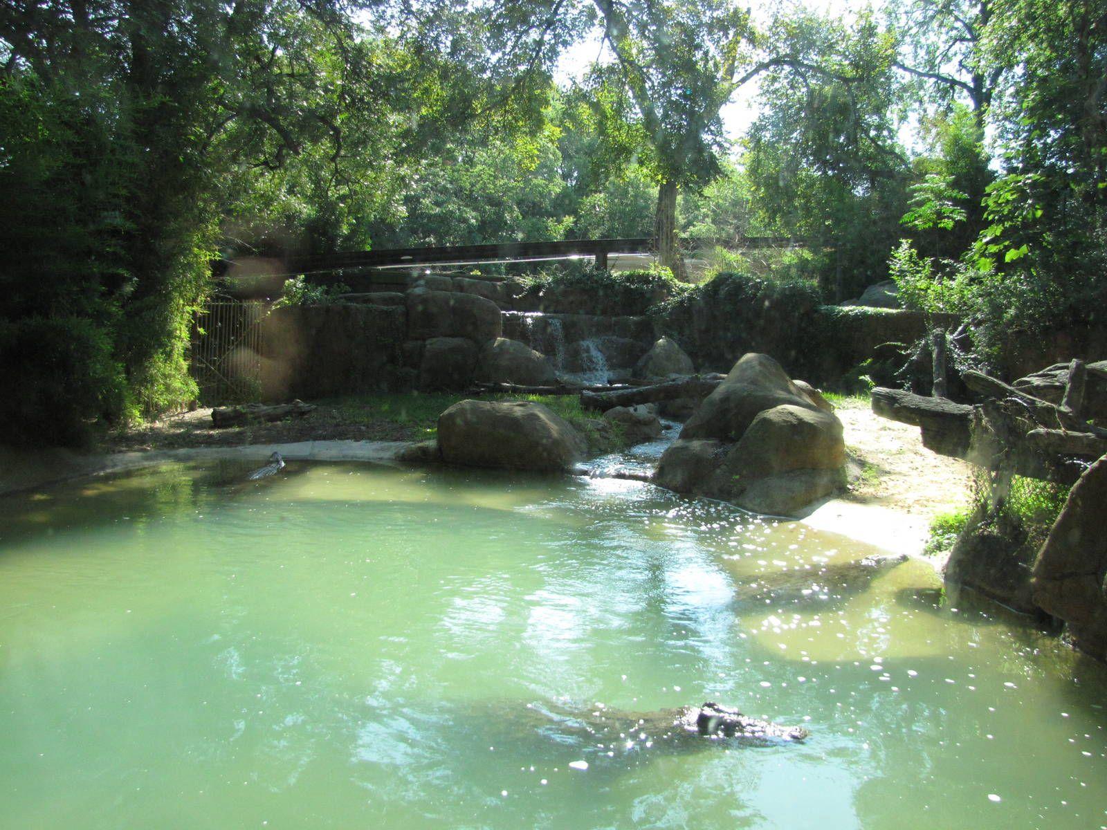 nile crocodiles in zoos