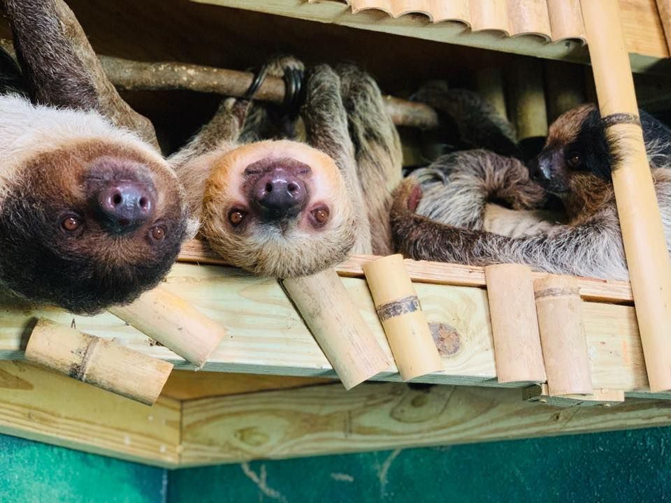 You Can Play With Sloths At Barn Hill Preserve In ...