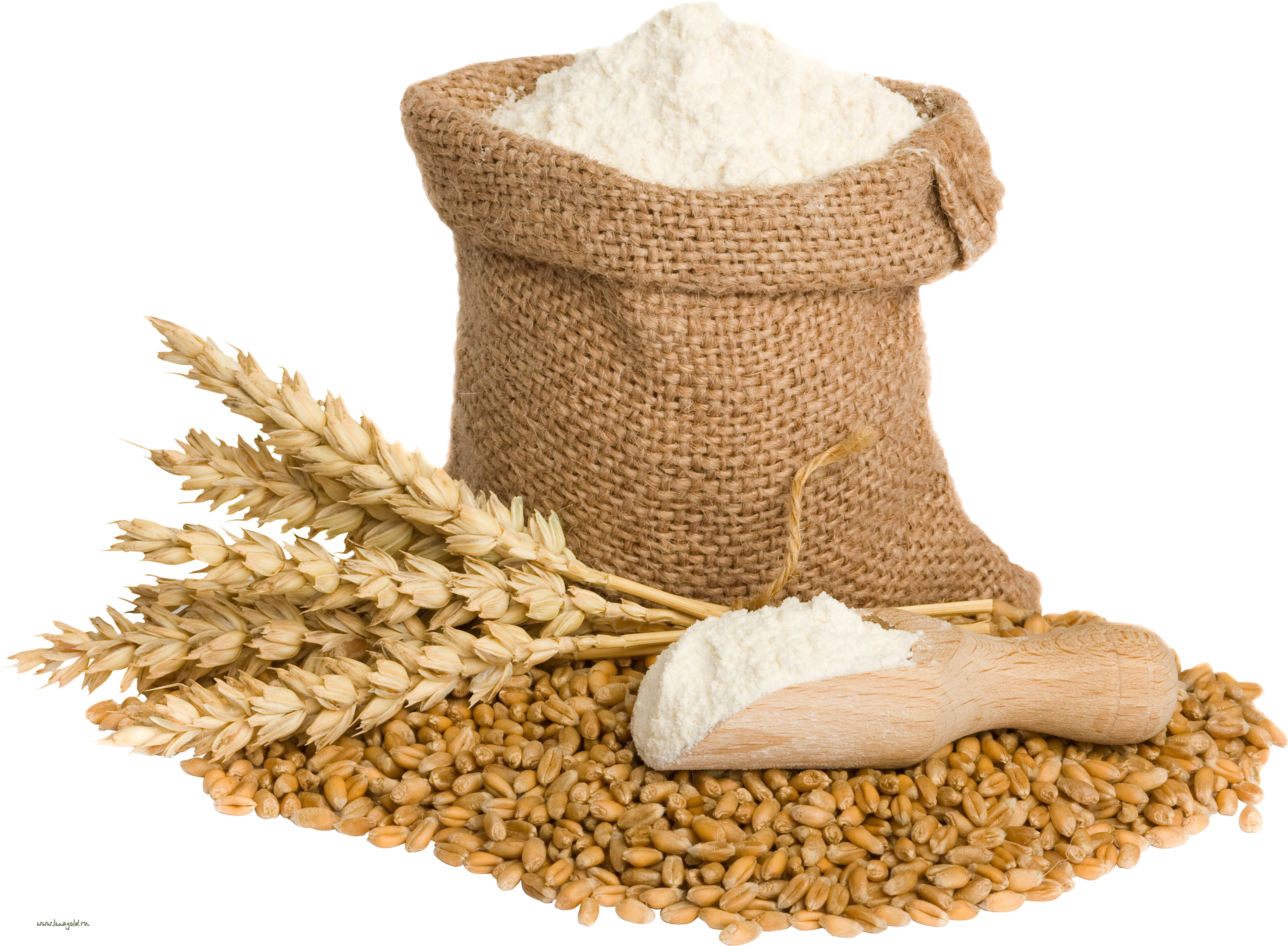 Wheat Png Image Gluten Grains Wheat Belly Psoriasis Gluten